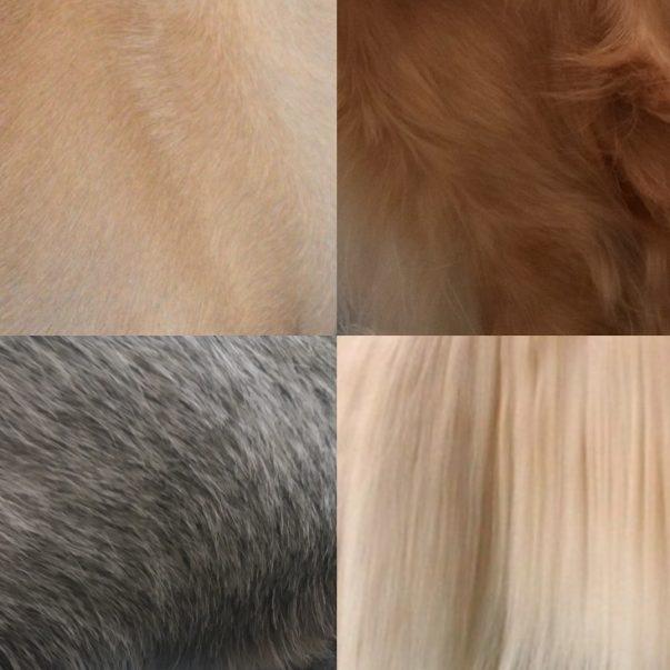 Za vse tipe dlake_petvizija